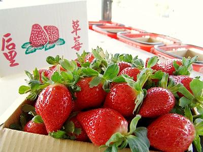 后里草莓‧泰安舊站草莓蕃茄